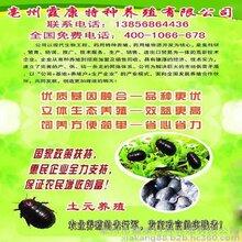 土元饲养管理技术合肥土元养殖