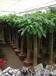 丰台总部基地花卉租赁,总部绿植盆栽租摆价格供应