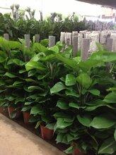 三里河绿植花卉租赁,三里河绿植花卉租摆服务供应商