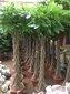 租赁绿植、租赁花卉、北京绿植租赁服务澳门永利网址图片