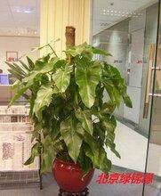 科技园绿植盆栽租赁,科技园绿植盆栽租摆服务公司