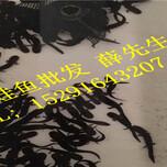娃娃鱼多少钱一斤,7月大鲵多少钱一斤,人工养殖娃娃鱼价格图片