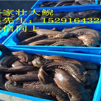 铜仁娃娃鱼价格,批发娃娃鱼的价格