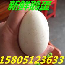 什么地方卖新鲜鹅蛋?新鲜鹅蛋多少钱一个?图片