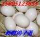 鸽子蛋怎么卖?哪里有鸽子蛋出售?