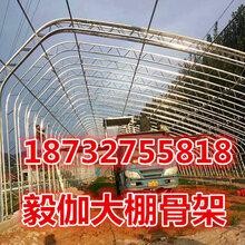 C型钢双拱温室大棚设计合理寿命长双膜大棚骨架厂家