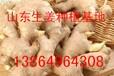 小黄姜产地小黄姜批发价格排名多少钱一斤