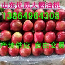 山東油桃批發產地油桃今年價格多少錢一斤圖片