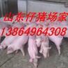 卖小猪卖小猪仔