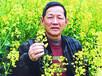 饲料油菜种子傅廷栋科技苑甘蓝型油菜种子种油菜不榨油