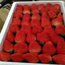 青浦妙香7号草莓苗产量是多少图片