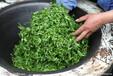 深圳代理茶饮料进口备案的流程?