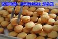 深圳寶安法式脆皮蛋糕培訓,無水脆皮蛋糕培訓班,限時優惠