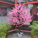 北京定做假树价格仿真树出售