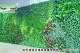 仿真植物墙,绿植墙,垂直绿化墙,背景墙