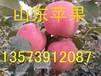 山东红星苹果价格红星苹果产地