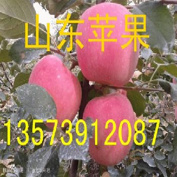 山東紅星蘋果價格紅星蘋果產地