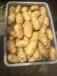 山東土豆產地價格馬鈴薯價格