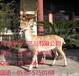 山东博昂信息科技动物制作模型