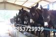 绿园肉驴繁育场肉驴养殖场肉驴价格,特种养殖场