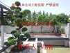 苏州私家别墅庭院绿化工程、私家花园景观绿化设计施工