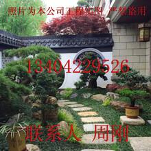 苏州私家别墅庭院绿化工程、私家花园景观绿化设计施工图片