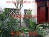 蘇州園林景觀綠化設計公司、大型造型景觀樹基地、綠化工程苗木