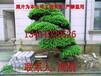 苏州别墅庭院绿化、苏州别墅苗木种植基地、苏州庭院绿化设计施工