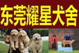 东莞宠物狗专业繁殖犬舍耀星犬舍位置定位