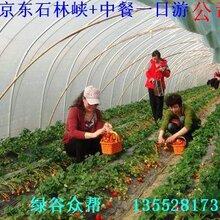 平谷京东大溶洞农家院采摘草莓农家院一日游