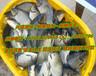 出售北京淡水鱼、北京观赏鱼、价优管送