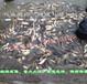 北京哪有鲤鱼、哪有草鱼?兴盛淡水鱼场告诉您