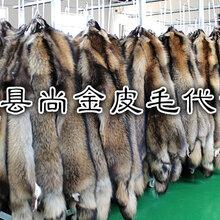 特种最新皮毛动物养殖基地图片