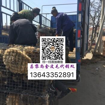 养殖占地开发貉子狐狸_水貂