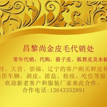 2017特种珍惜皮毛养殖基地,貉子狐狸优质幼