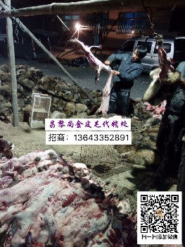昌黎貉子狐狸养殖场常年代收狐貉,昌黎貉子狐狸养殖