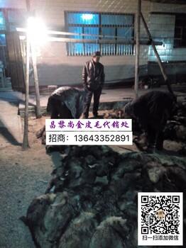 昌黎县尚金合作伙伴-河北省特种皮毛养殖基地