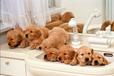 給狗狗洗澡注意事項_思芭汪旺