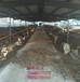 石嘴山驴图片德州驴肉驴仔长势快的肉驴苗品种