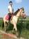 马驹骑乘马三河马