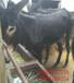乌头驴肉驴企业养殖场青海省德州驴杂交驴
