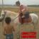 马驹骑乘马三河马北京