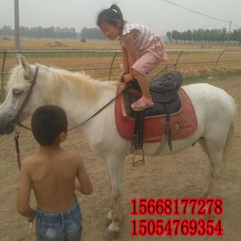 北京伊利马价格西南马多少钱一匹小马驹需要多少钱