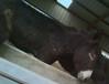 湖南武陵區小矮驢多少錢一頭