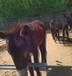 湖南武陵區改良德州驢哪里有驢賣