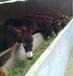湖南武陵區肉驢苗那家驢質量好