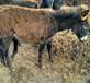 湖南武陵區改良德州驢場家銷售