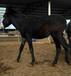 湖南武陵區繁殖驢哪里有驢賣