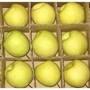 陕西砀山酥梨-陕西砀山酥梨批发价格图片