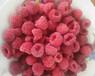 冷庫大量出售黑加侖藍莓軟棗獼猴桃樹莓燈籠果醋栗凍果